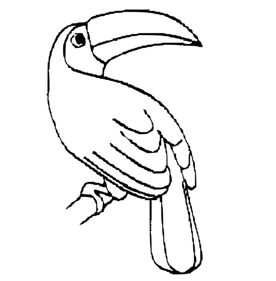 Palm Cockatoo coloring #13, Download drawings