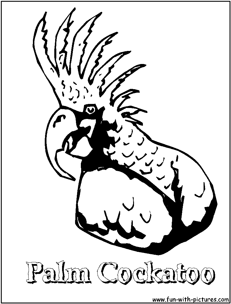 Palm Cockatoo coloring #14, Download drawings