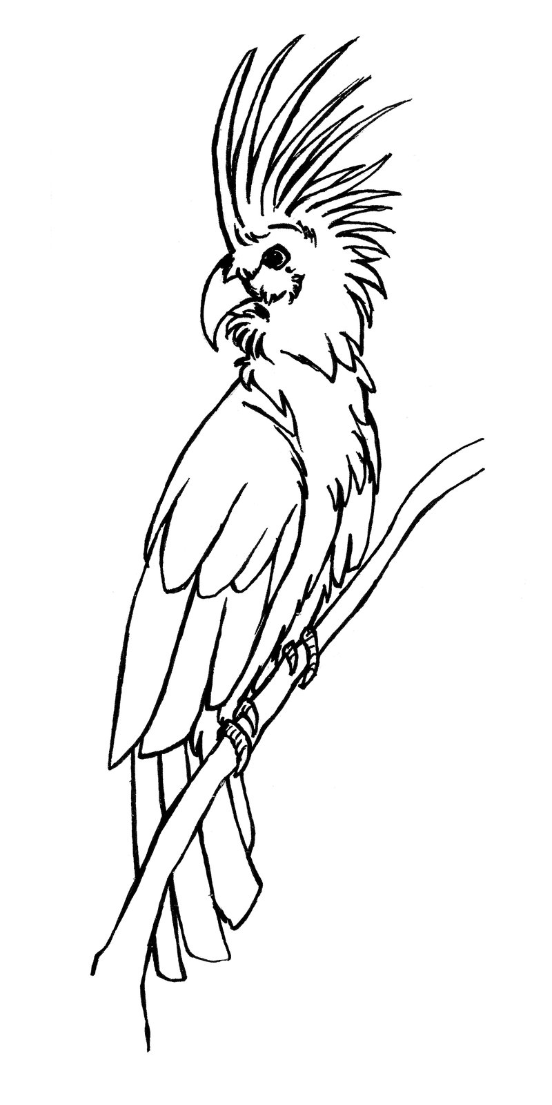 Palm Cockatoo coloring #19, Download drawings