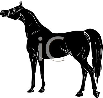Palomino clipart #7, Download drawings