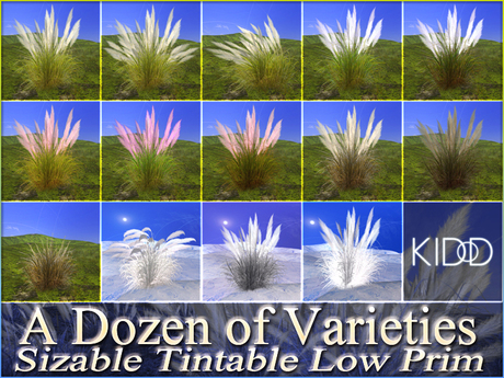 Pampas Grass coloring #7, Download drawings