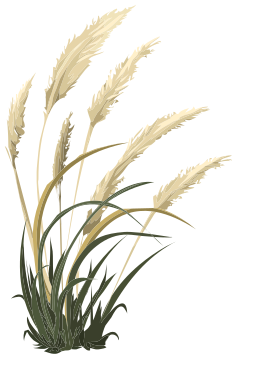 Pampas Grass svg #16, Download drawings