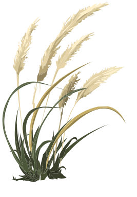 Pampas Grass svg #12, Download drawings