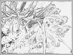 Pamukkale coloring #12, Download drawings