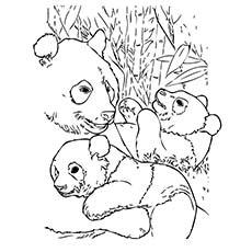 Panda mother baby coloring pages ~ Panda coloring, Download Panda coloring for free 2019