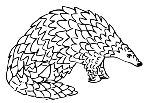 Pangolin coloring #8, Download drawings