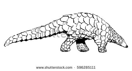 Pangolin coloring #15, Download drawings