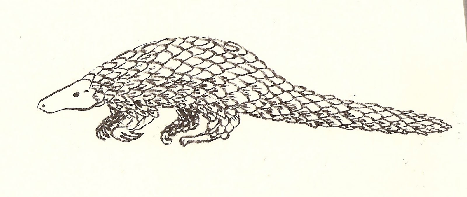 Pangolin coloring #16, Download drawings
