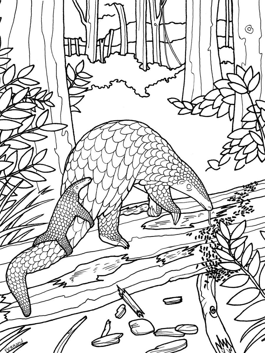 Pangolin coloring #13, Download drawings
