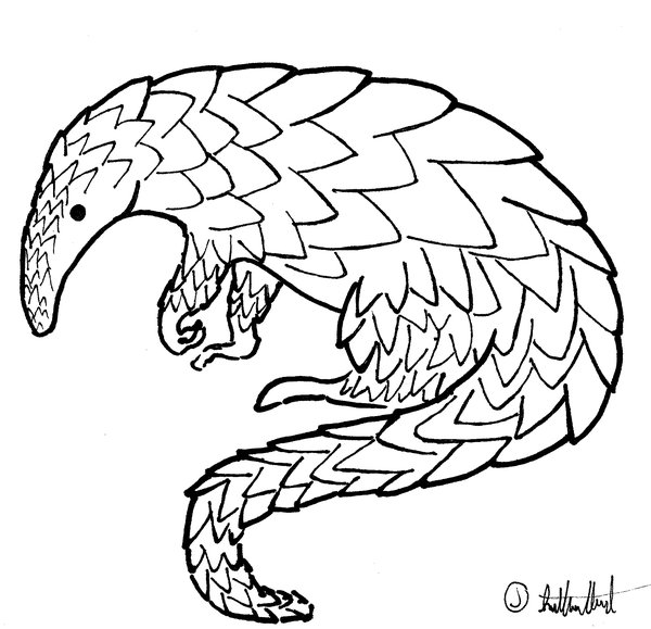 Pangolin coloring #12, Download drawings