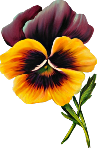 Pansy clipart #10, Download drawings