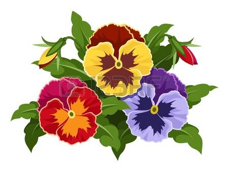 Pansy clipart #9, Download drawings