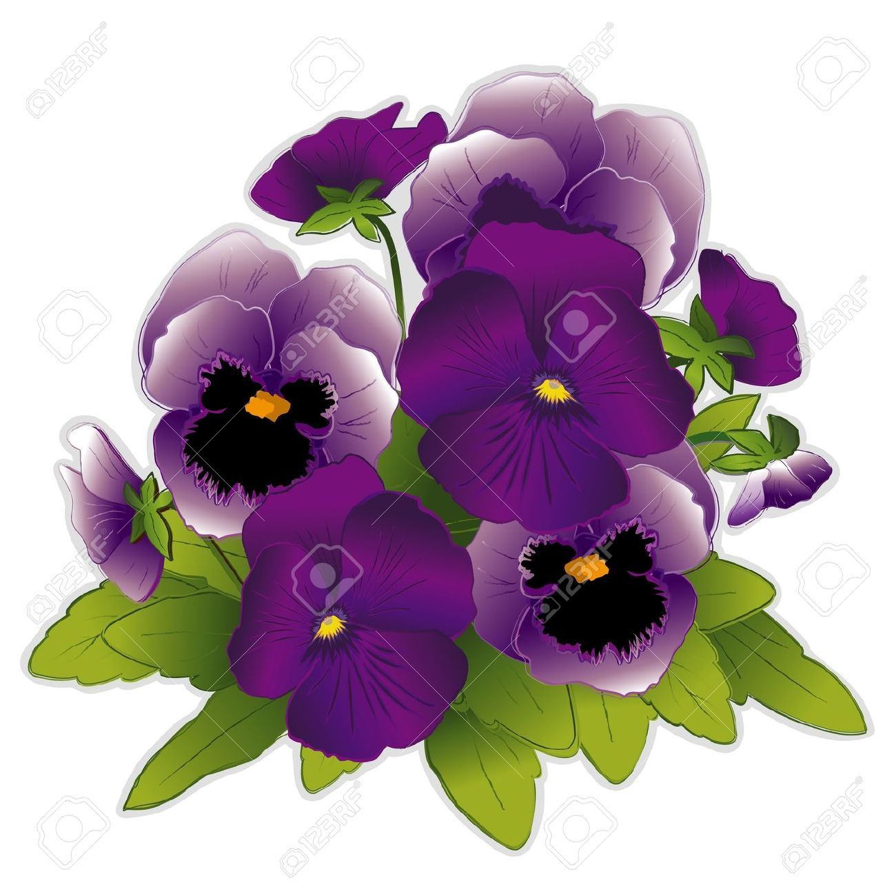 Pansy clipart #6, Download drawings