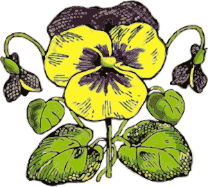 Pansy clipart #7, Download drawings