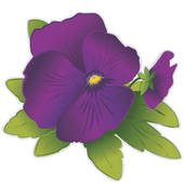 Pansy clipart #12, Download drawings
