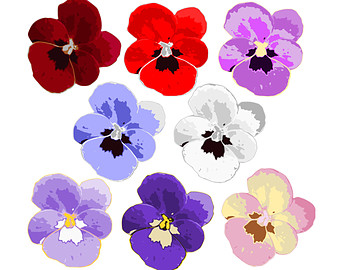 Pansy clipart #8, Download drawings