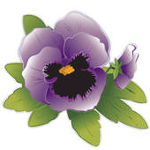 Pansy clipart #19, Download drawings