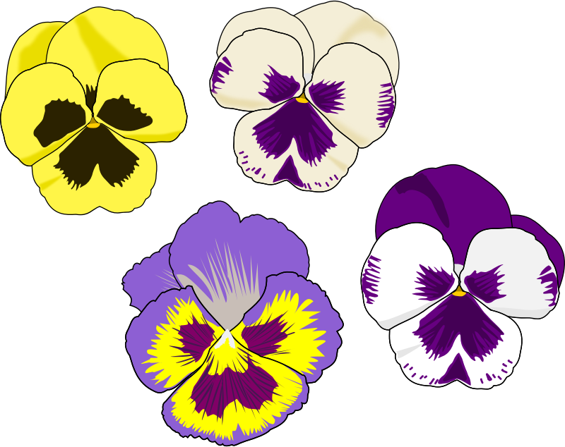 Pansy clipart #4, Download drawings