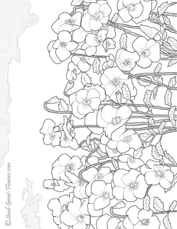 Pansy coloring #2, Download drawings