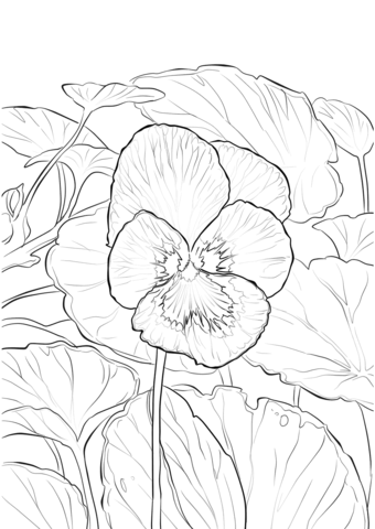 Pansy coloring #10, Download drawings