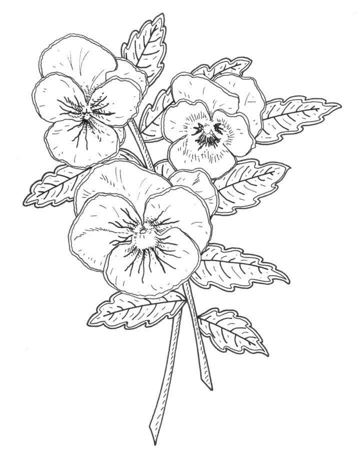 Pansy coloring #12, Download drawings