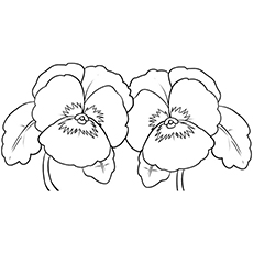 Pansy coloring #8, Download drawings
