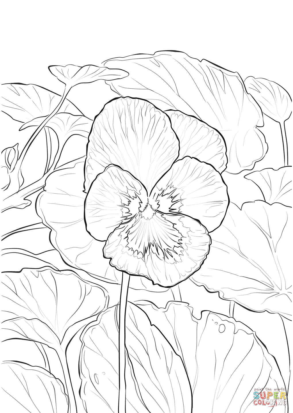 Pansy coloring #6, Download drawings