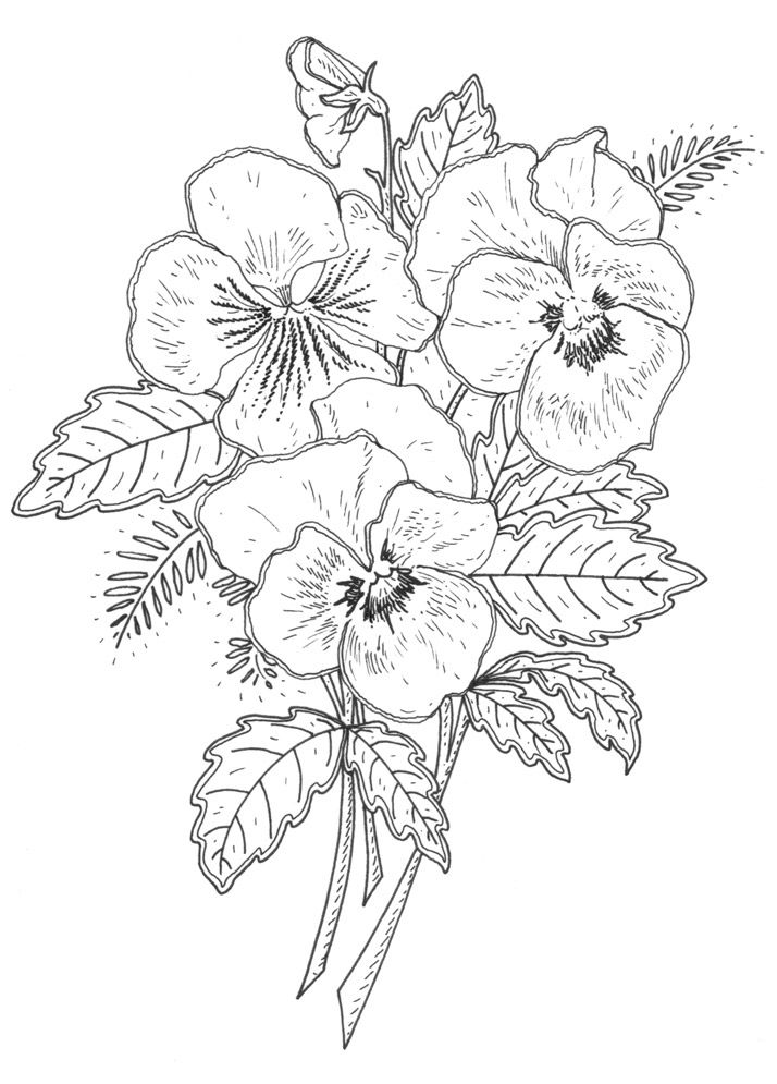 Pansy coloring #3, Download drawings