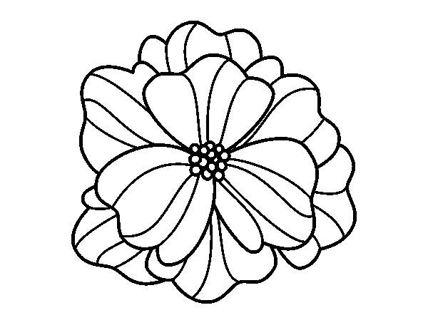 Pansy coloring #7, Download drawings