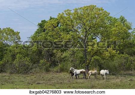 Pantanal clipart #14, Download drawings