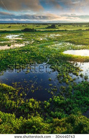 Pantanal clipart #9, Download drawings