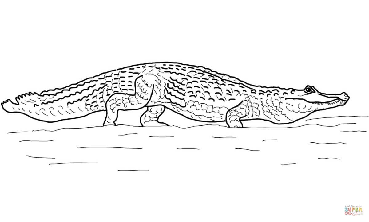 Pantanal coloring #18, Download drawings