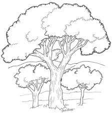 Pantanal coloring #9, Download drawings