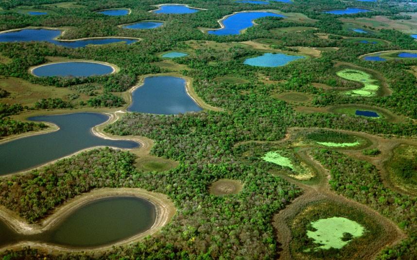 Pantanal coloring #15, Download drawings