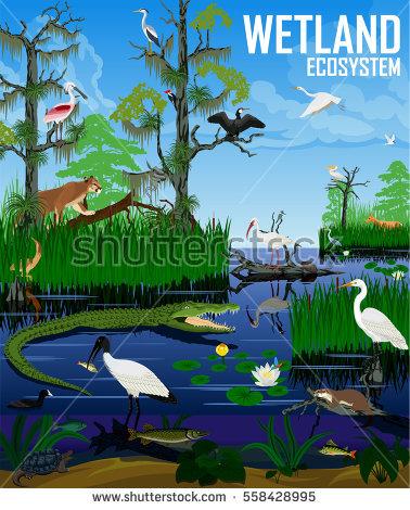 Pantanal coloring #4, Download drawings