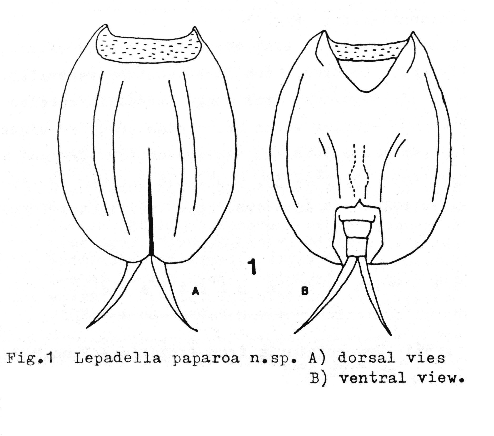 Paparoa coloring #2, Download drawings