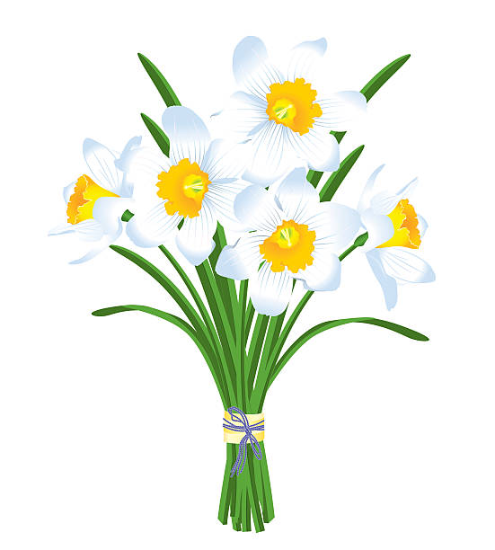 Paperwhite Narcissus clipart #13, Download drawings