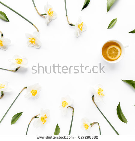 Paperwhite Narcissus clipart #14, Download drawings