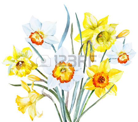 Paperwhite Narcissus clipart #10, Download drawings