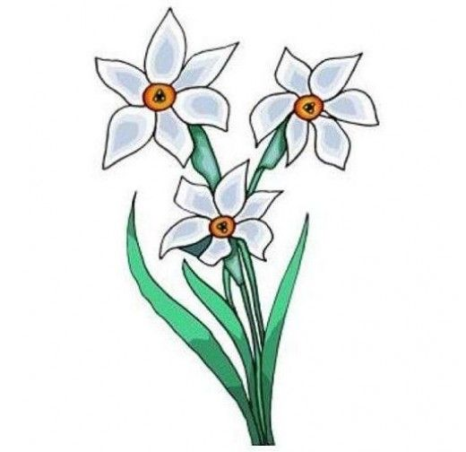 Paperwhite Narcissus clipart #11, Download drawings