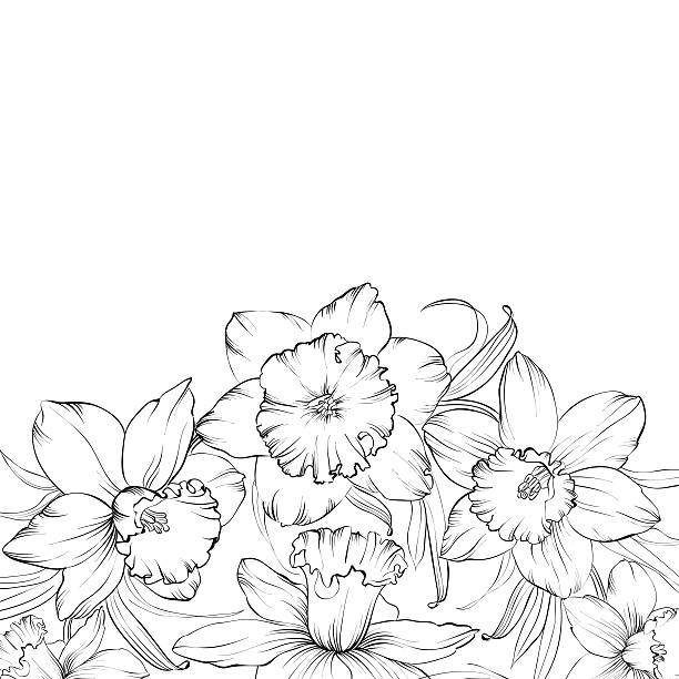 Paperwhite Narcissus coloring #11, Download drawings