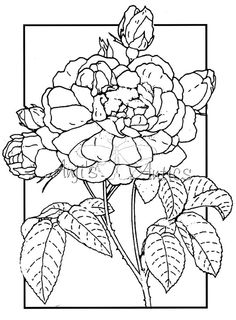 Paperwhite Narcissus coloring #10, Download drawings