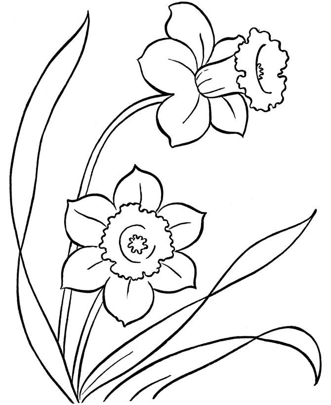 Paperwhite Narcissus coloring #3, Download drawings