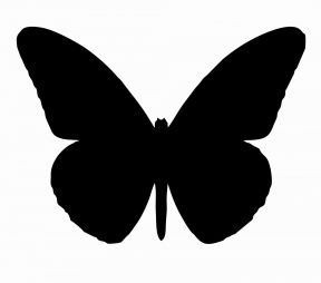 Papillon clipart #9, Download drawings