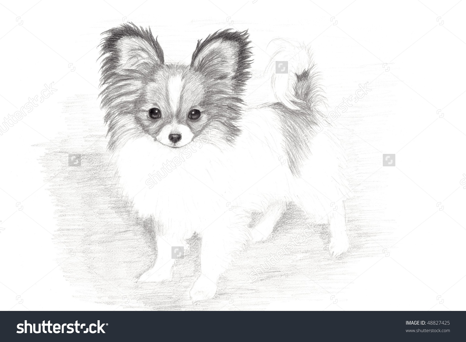Papillon coloring #1, Download drawings