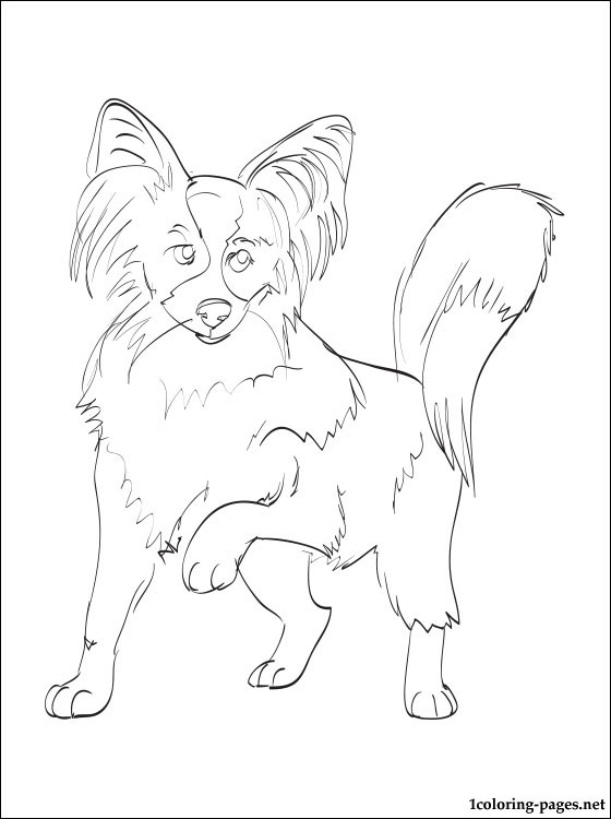 Papillon coloring #5, Download drawings