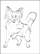 Papillon coloring #4, Download drawings