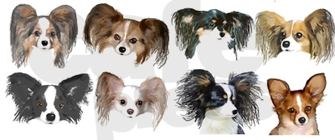 Papillon coloring #18, Download drawings