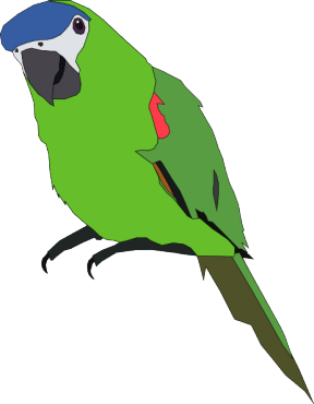 Parakeet clipart #8, Download drawings