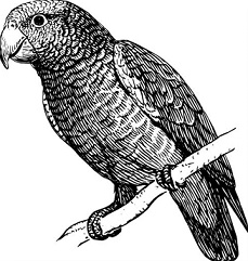 Parakeet clipart #13, Download drawings